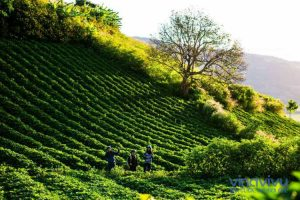 [Đắk Nông] Top những địa điểm nhất định phải ghé thăm khi đến Đắk Nông