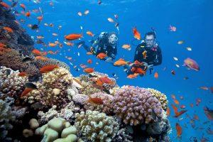 [Kiên Giang] Du Lịch Câu Cá Lặn Ngắm San Hô Ở Đảo Ngọc Phú Quốc