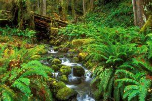 [Kiên Giang] Du Lịch Bắc Đảo  –  Xuyên Rừng Nguyên Sinh Phú Quốc
