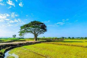 Check In Cây Cô Đơn ( Mắt Biếc) – Ngắm hoàng Hôn Trên Phá Tam Giang(1 Ngày)
